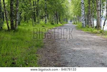 Gravel Road In Umeå, Sweden