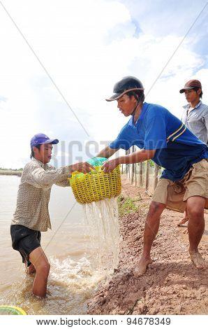 Bac Lieu, Vietnam - November 22, 2012: Fishermen Are Harvesting Shrimp From Their Pond In Bac Lieu C