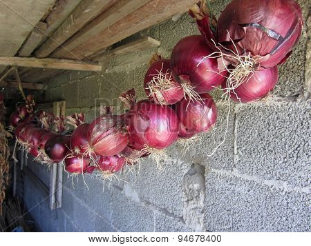 Hanging Red Onion Collection