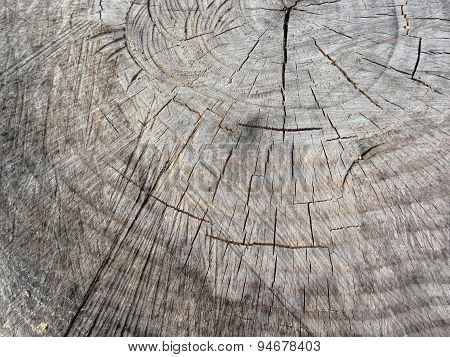 Wood Texture Of Cut Pine Tree Trunk