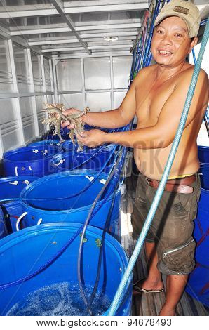 Bac Lieu, Vietnam - November 22, 2012: A Farmer Is Showing His Shrimps Which Are Stored Alive In Tan