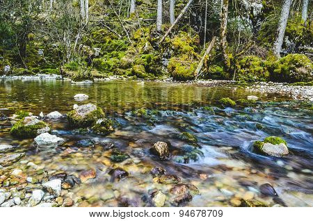 Small stream in a forest