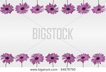 Flower frame - decoration on white background
