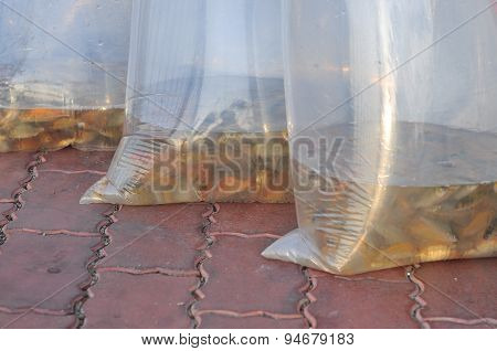 Ho Chi Minh City, Vietnam - April 24, 2015: Fishes Are Kept In Plastic Bags Preparing To Be Released