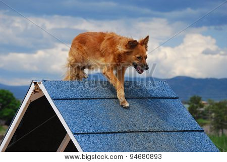 Dog agility A-frame