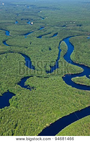 Forest river in summer, top view