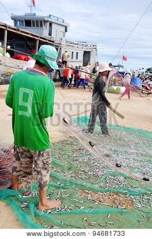 Quang Ngai, Vietnam - July 31, 2012: Fishermen Are Removing Anchovies Fish From Their Nets To Start