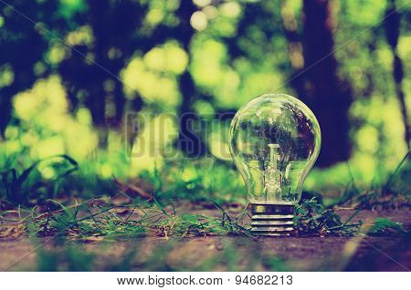 Lamp in forest