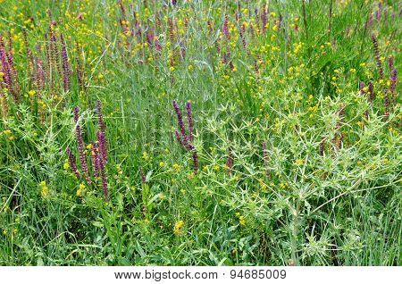 Meadow grass, prairie grass.