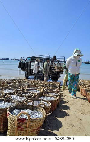 Lagi, Vietnam - February 26, 2012: Fisheries Are Located On The Beach In Many Baskets Waiting For Up