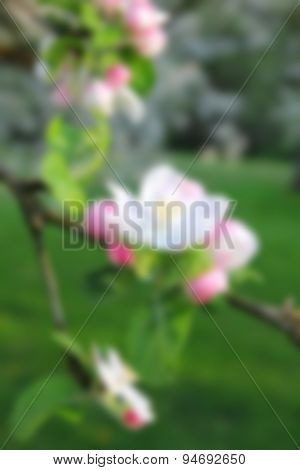 Apple Blossoms In Spring. In Blur Style