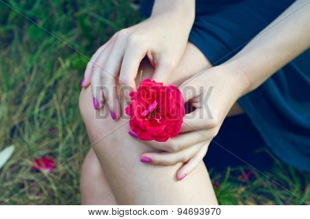 Girl Holding A Rose On Her Lap
