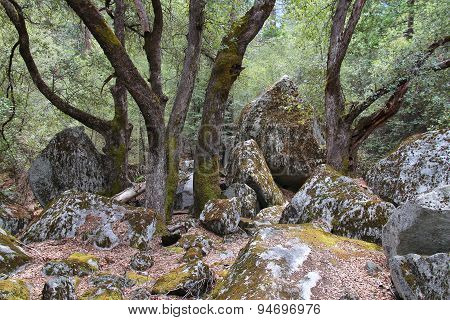 Forest In Yosemite National Park