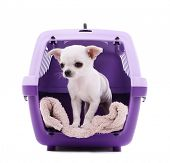 picture of caged  - Adorable chihuahua dog in travel plastic cage isolated on white - JPG
