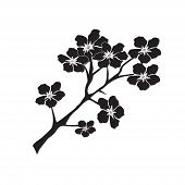 pic of black-cherry  - vector illustration of twig of cherry blossom in black color on white background - JPG
