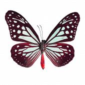 stock photo of mime  - Brown butterflyTawny Mime butterfly in fancy color profile isolate on white background - JPG