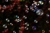 pic of blowers  - The rainbow bubbles from the bubble blower - JPG