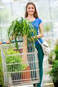 pic of trolley  - The customer pushing the trolley between the rows of plants - JPG