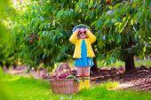 image of cherry trees  - Kids picking cherry on a fruit farm - JPG