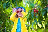 image of cherries  - Kids picking cherry on a fruit farm - JPG
