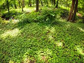 picture of distortion  - The green lawn in a park in the shade of trees with patches of bright sunshine and wide angle distortion view - JPG