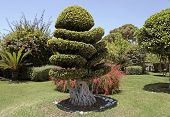 image of bonsai  - Beautiful natural bonsai tree in the garden - JPG