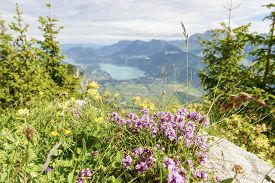 image of annecy  - view of Lake Annecy in the French Alps with flowers - JPG