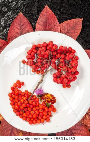rowan berries in autumn, rowanberry, ash -berry, outdoor