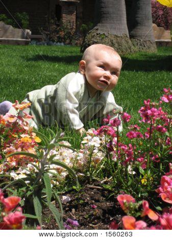 Baby & Flowers 1