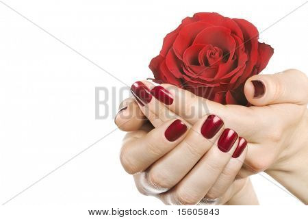 Woman hands with red rose on white. Space for text.