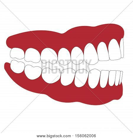 open mouth is not closed teeth, dentition and gum side view, occlusion, the articulation, vector illustration for dental clinic