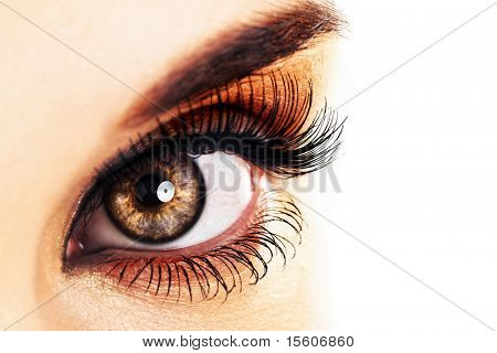 Woman eye  with long eyelashes closeup. Space for text.