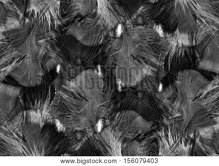 Abstract black and white feather background pattern