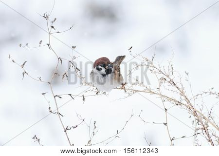 beautiful little bird sitting on a branch of wormwood in the snow
