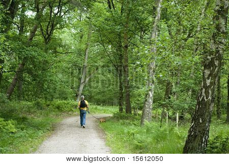 a man is walking the dog in a beautiful forest