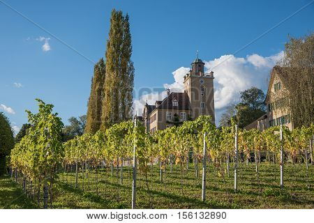 Pictorial Vineyard And Castle Salenegg, Maienfeld