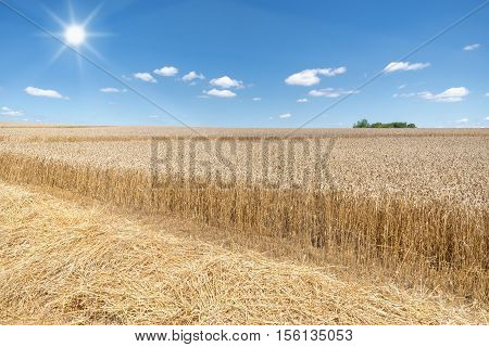 Straw in front of a partially already harvested, ripe wheat field in the sunshine