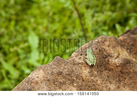 Horizontal photo in color and shallow depth of field of a lonely grreen frog about to jump off cliff