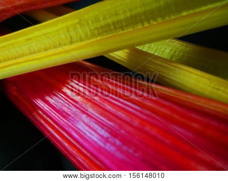 Closeup of the multicolored rainbow stalks of the swiss chard