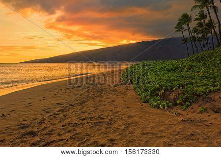 Beach and palms trees at sunset at Sugar Beach Kihei Maui Hawaii USA