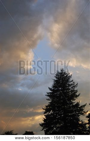 Single pine against sky as summer storm approaches