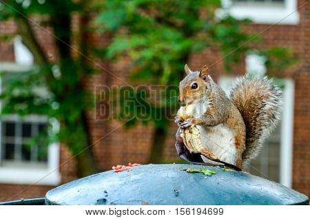 Squirrel holding and eating banana on garbage can