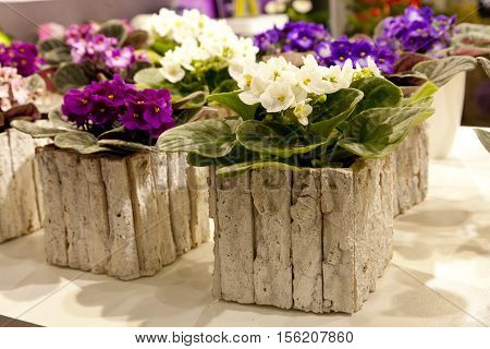 stone pots with colorful violets standing on the table
