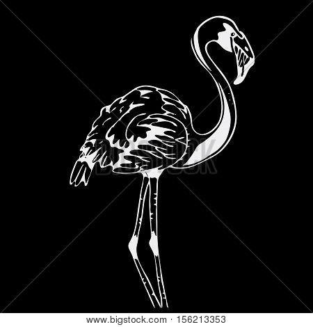 Hand-drawn pencil graphics, bird, flamingo. Engraving, stencil style. Black and white logo, sign, emblem, symbol Stamp seal Simple illustration Sketch