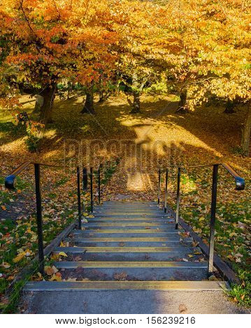 Steps with black railings leading into a park with colorful autumn trees.