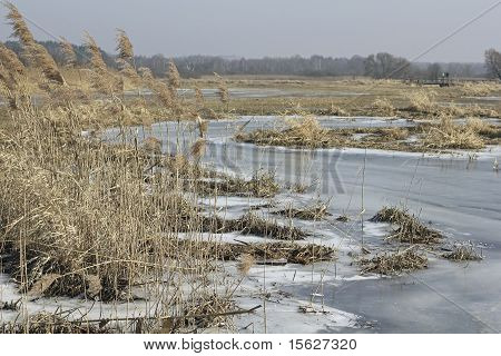 Wetlands In Berlin, The German Capital