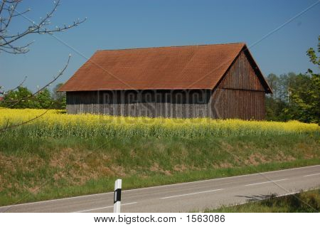 German Barn And Fields Of Raps