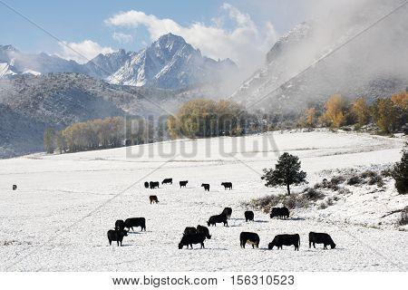 Snow on Mt. Sneffels in the San Juan mountains near Telluride Colorado