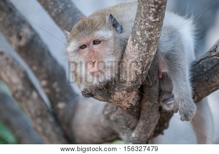 Old macaque monkey in the jungle of Sam Roi Yot National Park south of Hua Hin in Thailand