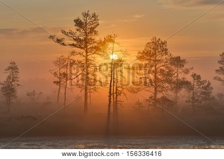 Misty bog landscape with rising sun behind the trees.